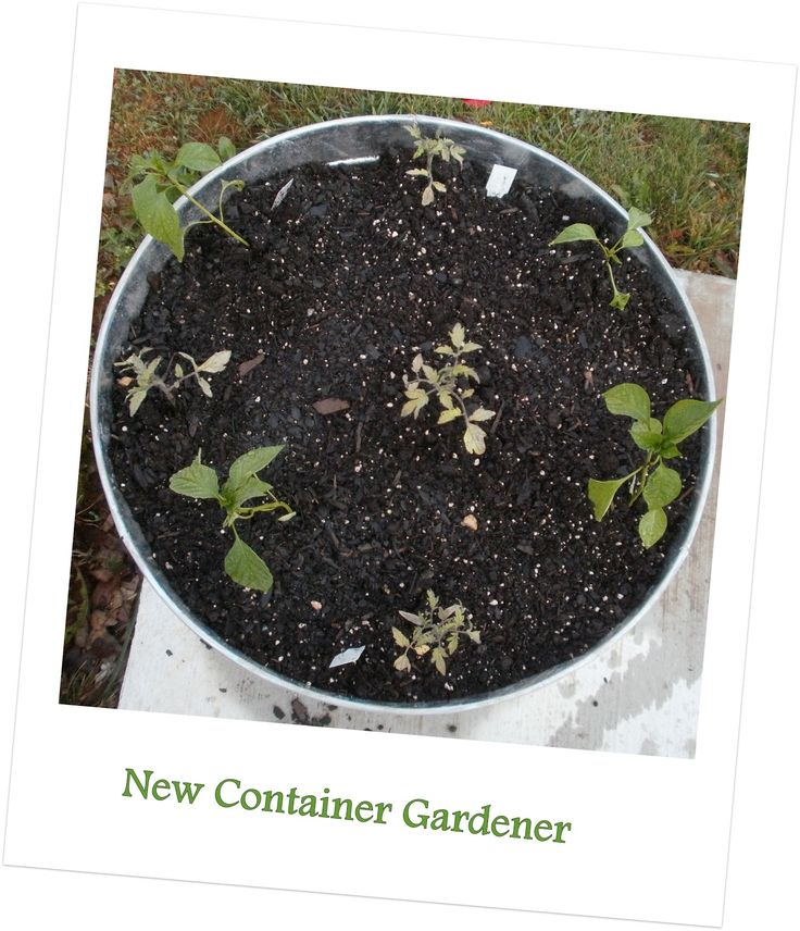 Outdoor and Gardening with Red Hill First Time Container Gardener