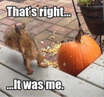 You Got It Animal Meme 17 Best images about A...