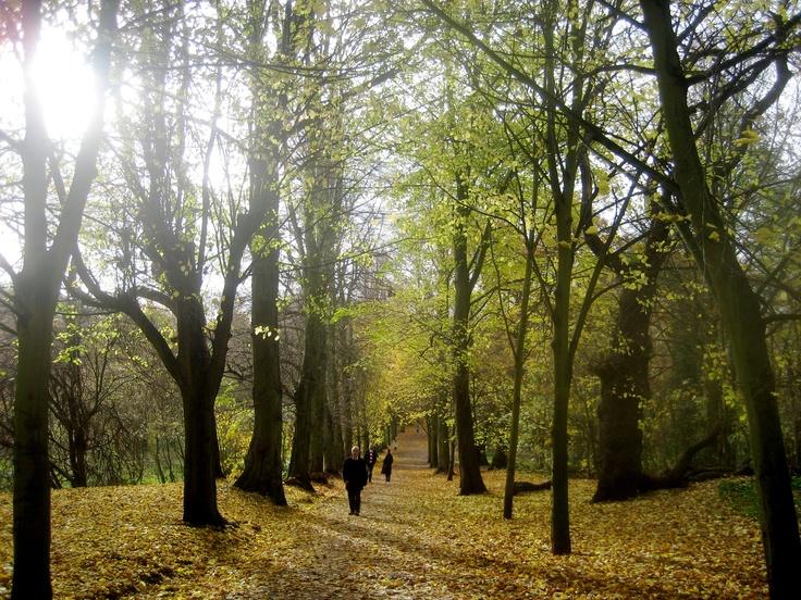 Autumn in Hampstead Heath, London