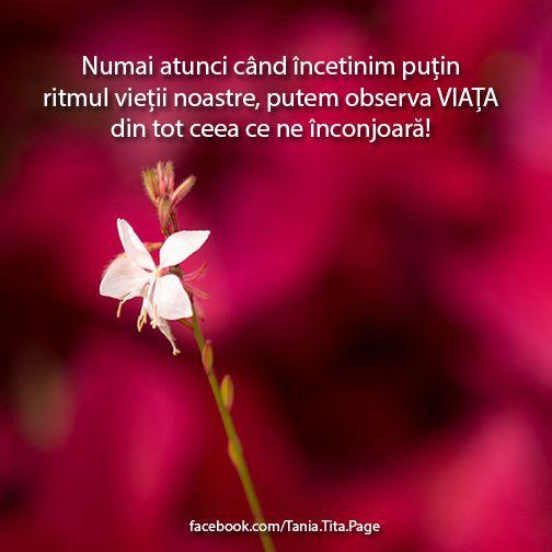 Numai atunci când încetinim puțin ritmul vieții noastre, putem observa VIAȚA din tot ceea ce ne înconjoară! http://facebook.com/Tania.Tita.Page