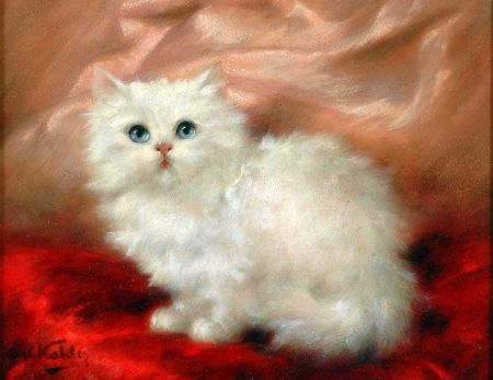 Fluffy Cat - Cats Wallpaper ID 1987985 - Desktop Nexus Animals