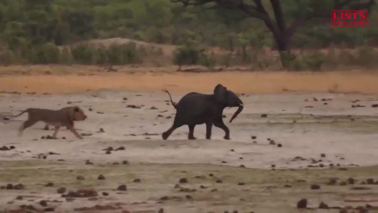 Chưa bao giờ lại được xem những video về động vật rùng mình như thế, Lis...