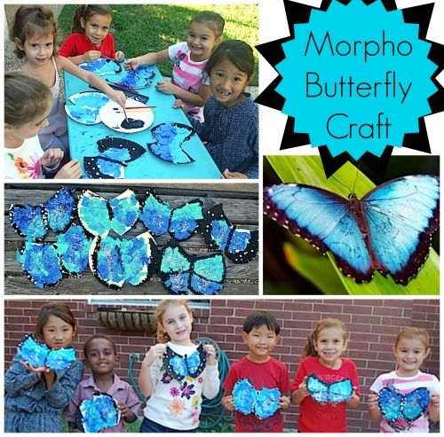 Morpho Butterfly Craft. First learn about the blue morpho butterflies of Central and South American rainforests, and then make a morpho butterfly. Science + art lesson.