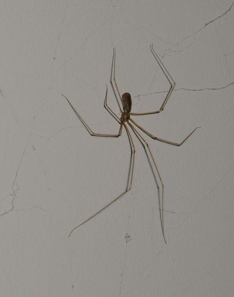 Ako sa zbaviť pavúkov