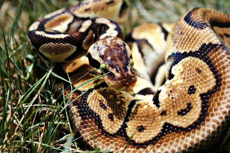 Crazy eyes on a snake.