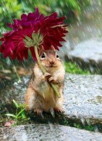 Little chipmunk umbrella