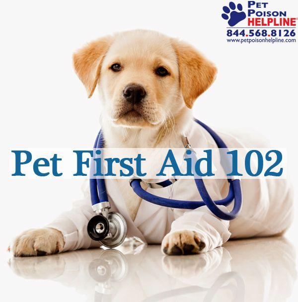 pdf vital first aid kit