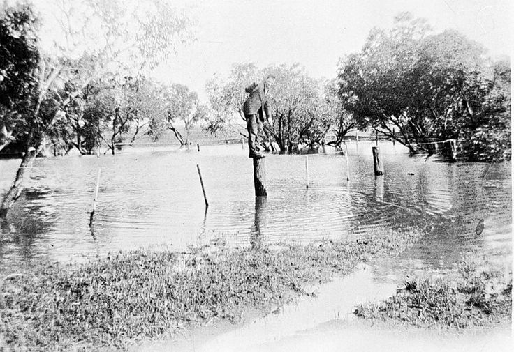 A man standing on a fence post in floodwater between Speed and Turriff, c1925.