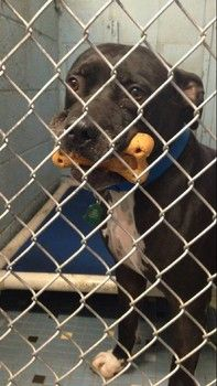 **This sweetie desperately needs a furever home.**  Homeless dog, arrived as a puppy, still waits years later for a home