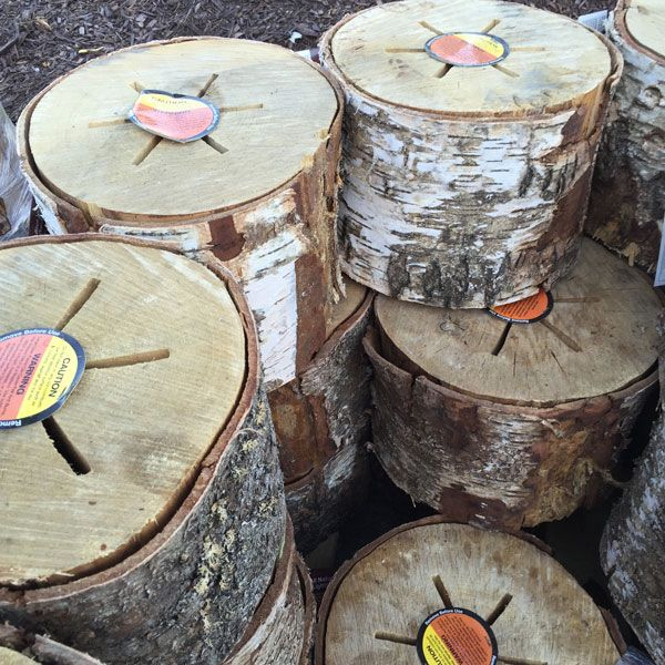"From backyard to beach, these bonfire ""Light 'n Go"" logs help get the party…"