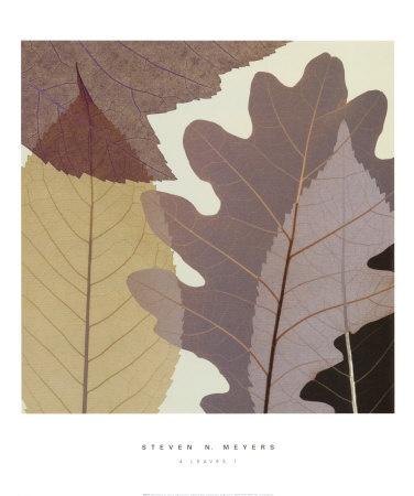 Four Leaves I by Steven N. Meyers