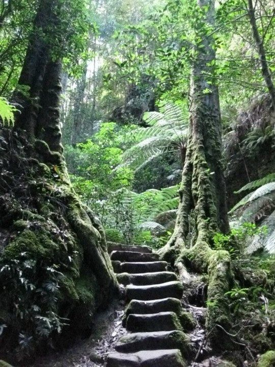 Tamborine Mountain rain forest walks