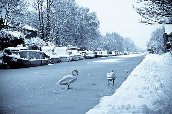 swans on a frozen canal