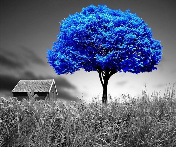 This type of photography is color. It focuses on the bright blue tree in the blurry grey background. This bright color attracts viewers more than the grey background making it pop.