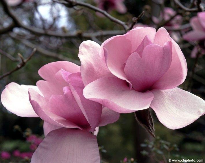 FLOWERS에 관한 177개의 최상의 Pinterest 이미지 | 아름다운 꽃, 꽃 정원 및 배경화면 FLOWERS
