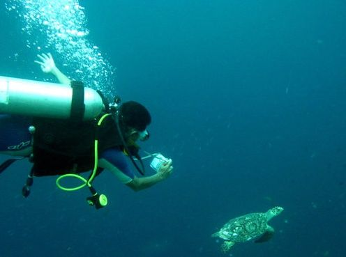 Lucky Turtle at Bunaken Marine Park