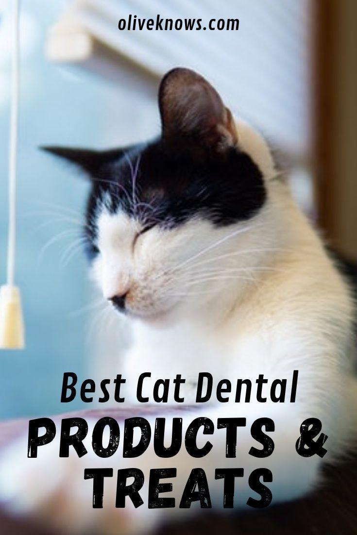Smart N Tasty Feline Dental Treats For Cat Dental Treats Grain Free Cat Snacks