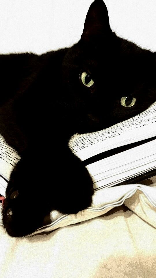 Do not disturb - black kitty:
