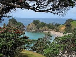 pictures of whananaki - Google Search