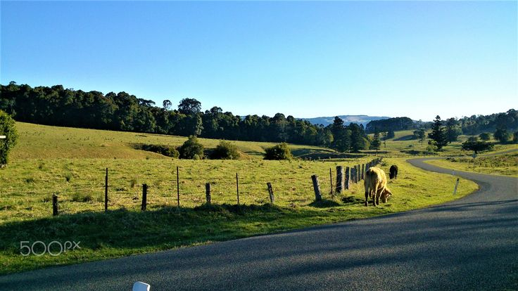 Australian Countryside scene 2 - null
