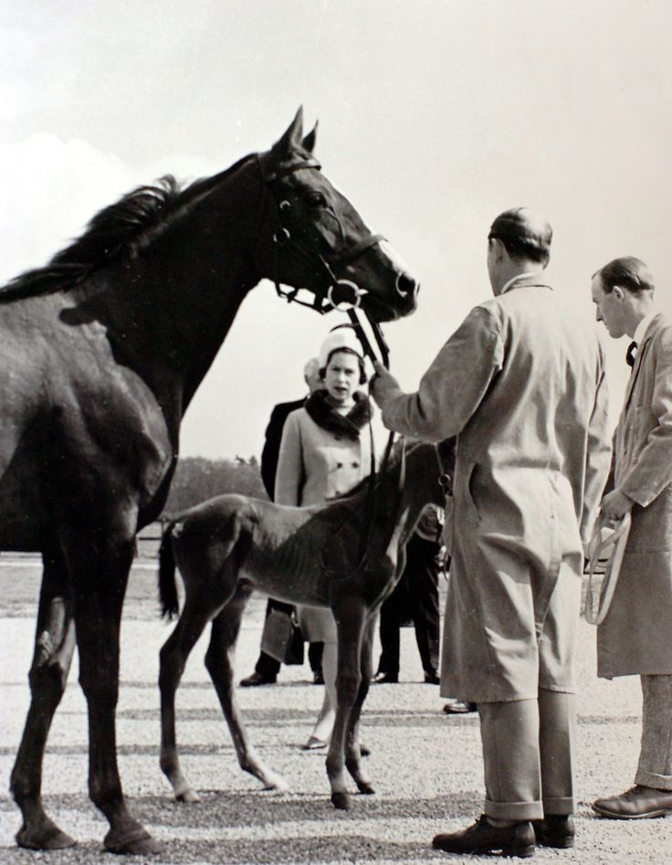 Her Majesty Queen Elizabeth II and her local equestrian connections | EQ Life