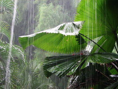Средняя температура на Бали варьируется от 26 до 29 градусов. На Бали и Ломбок погода очень похожа. Дождливый период длится с октября по декабрь. Самые обильные дожди выпадют с декабря по февраль. В летние месяцы, а это июнь-август, дует освежающий ветерок и температура не очень высокая. Сухой сезон с апреля по октябрь считаетя самым комфортным временем для приезда на Бали, чтобы провести свой отпуск превосходно.