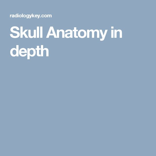 Skull Anatomy in depth
