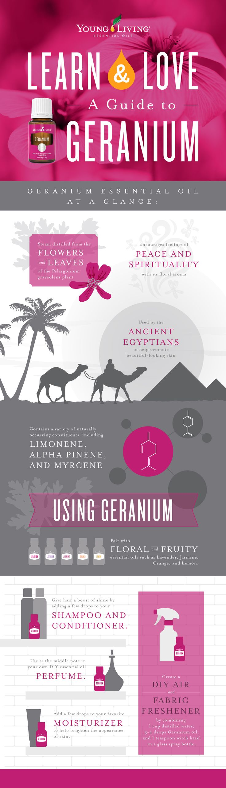 Young Living Essential Oils | All About Geranium Infographic | WWW.THESAVVYOILER.COM