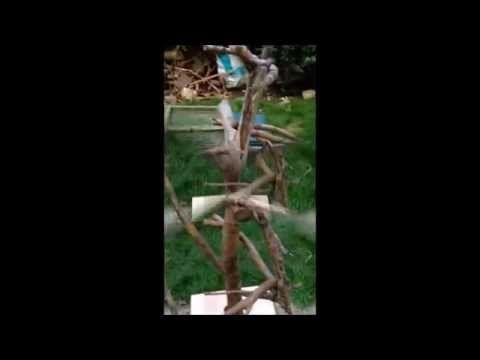 Best 25 Best Climbing Tree Stand Ideas On Pinterest Cat