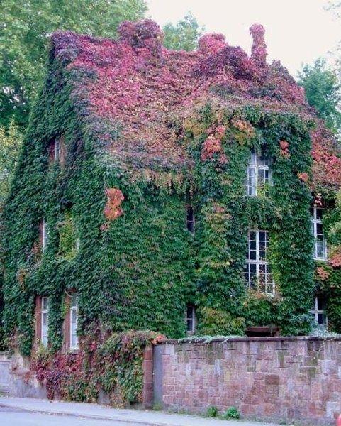 Dit plaatje is een goed voorbeeld van een huis met veel groen. Dit kan ik goed gebruiken als inspiratie voor de dichtbegroeide kant van het huisje