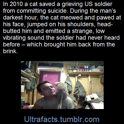 Ultrafacts.tumblr.com, They say one good deed deserves another and it...