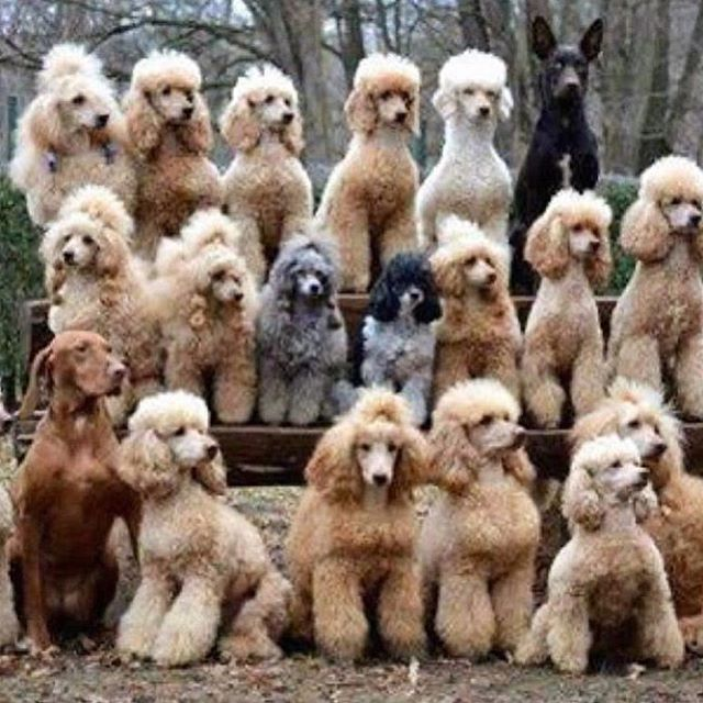 Dogs Crewlife Repost Dansisco Via Elle Germany Magazine Official