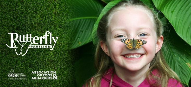 Butterfly Pavilion is open daily from 9 a.m. to 5 p.m., year round. We are conveniently located just 15 minutes from downtown Denver off Hwy 36 at 104th Avenue.