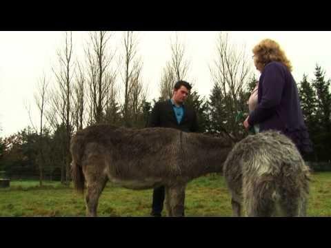 Faye Rogers - Animal Communication - New Zealand | General Information