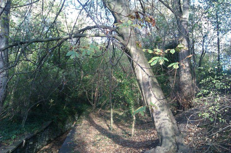 Forest overhang