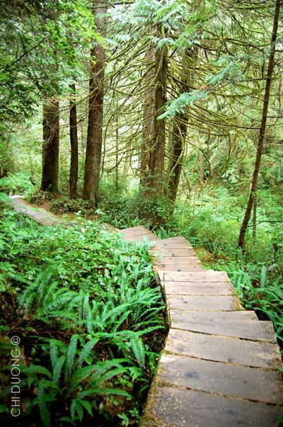 The hike on this boardwalk is incredible | Lake Ozette, Olympic Peninsula, Washington.  The boardwalk trail leads to Cape Alava, where you can explore tidepools along a rugged stretch of Pacific Coast.