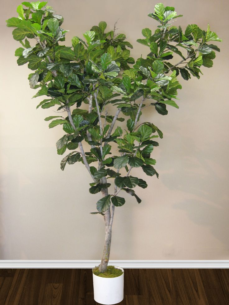 fiddle leaf tree handcrafted by aldik homeu0027s experienced treemakers visit www - Silk Trees