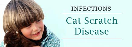 """About Cat Scratch Disease """"Cat scratch disease is not contagious from person to person. The bacteria are spread by the scratch or bite of an infected animal, most often a kitten. They can also be transmitted if the animal's saliva comes in contact with an eye or through broken skin. Sometimes multiple cases occur in the same family, usually via contact with the same infected animal.  Having one episode of cat scratch disease usually makes people immune for the rest of their lives."""""""