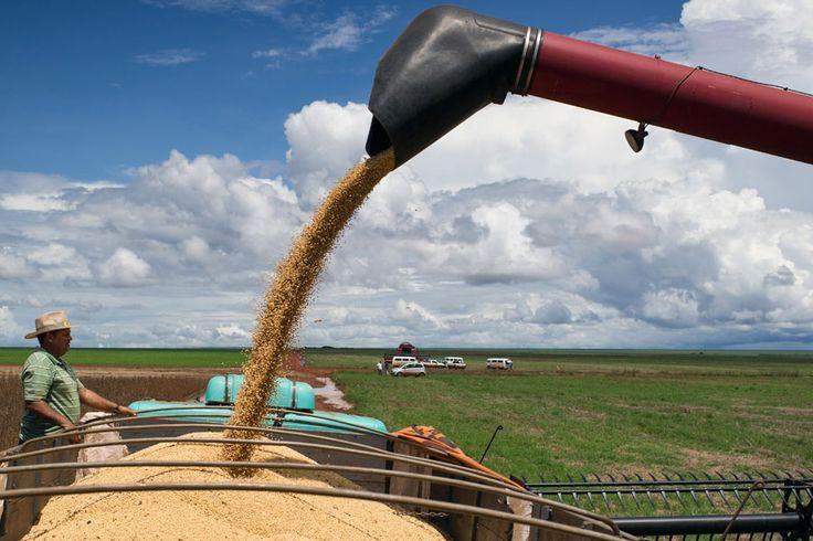 Marina Silva e o agronegócio | #Agronegócio, #BernardoSantoro, #Economia, #Eleições2014, #MarinaSilva, #Pib
