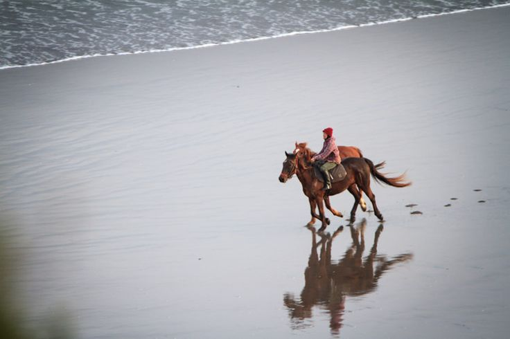 Horses on Ngarunui beach