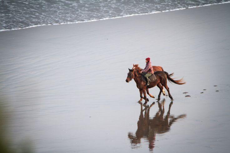 Horses on Ngarunui beach