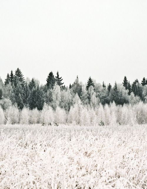 Winter Frost//