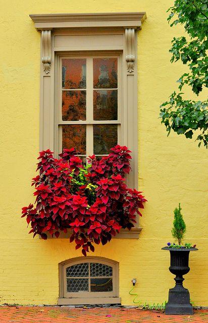 sárga ház élénk virágokkal