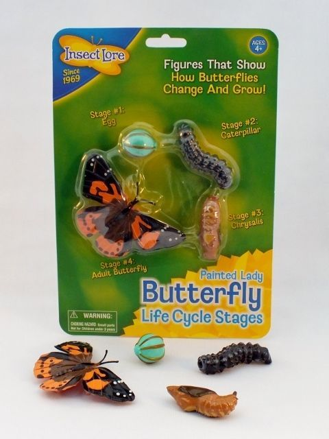 Life Cycle Figures - Butterfly, Bee, Ladybird or Frog Available, Insect Lore  #InsectLore