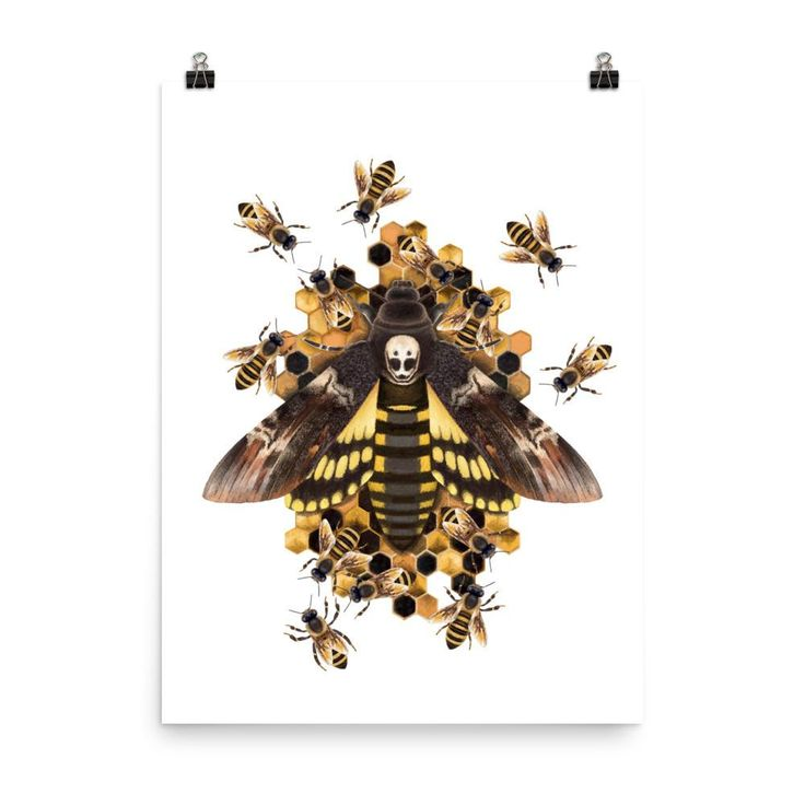 Death's head hawkmoth poster