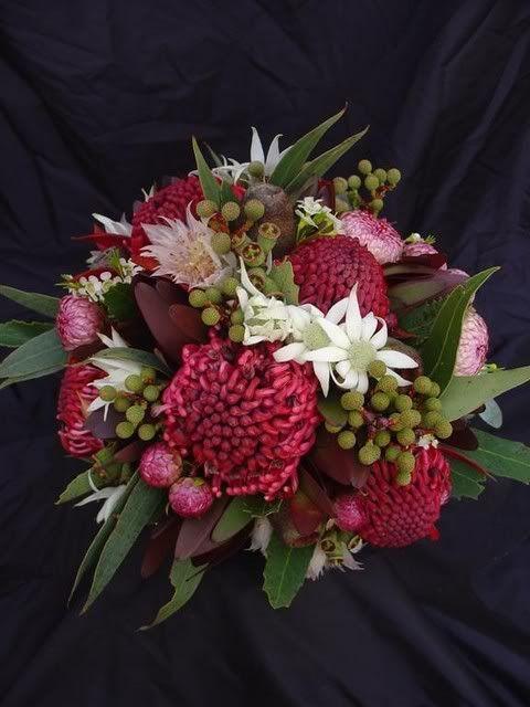 waratah, flannel flower, berzelia, serruria, leucodendron 'Jubilee Crown'