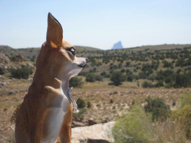 The ceramic Chihuahua admiring the view