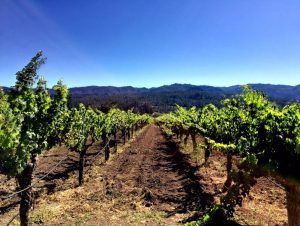 The Top 10 Wineries for Napa Insiders