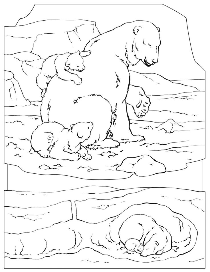 polarbearcoloringthumb Polar bear coloring page, Bear