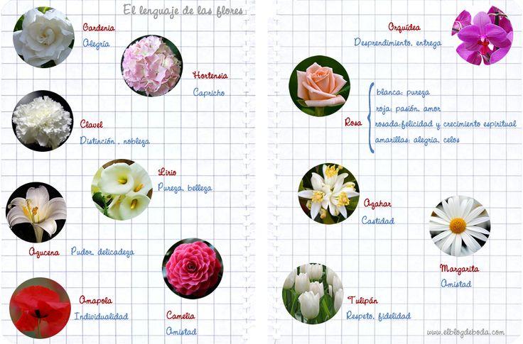 M s de 25 ideas incre bles sobre azucena planta en pinterest for Azucena plantas jardin